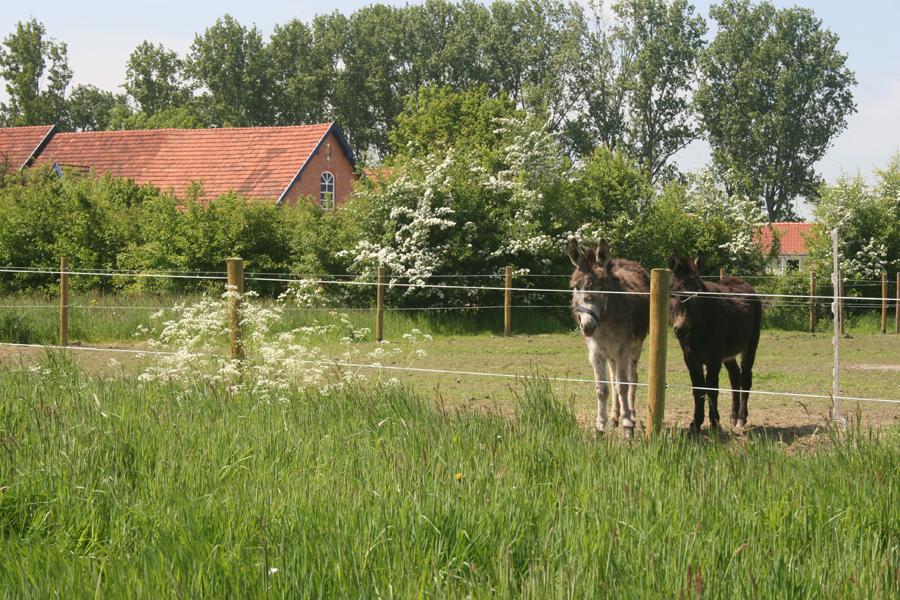 Domus-Silva-Koningshooikt-Lier-Lente-12