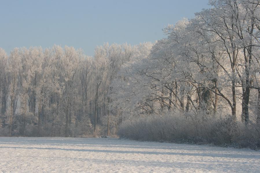 Domus-Silva-Koningshooikt-Lier-Winter-06