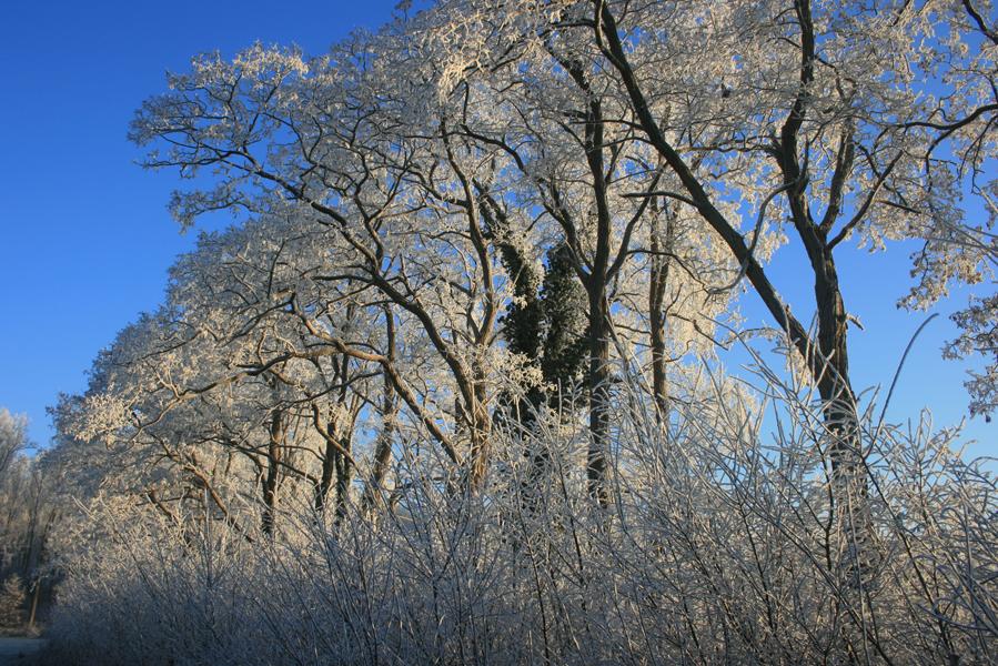 Domus-Silva-Koningshooikt-Lier-Winter-07